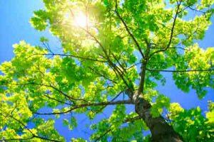 Oude-bomen-verzorgen